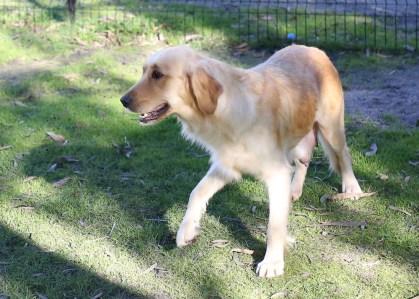 IVY - banskia park puppies - 1 of 50 (43)