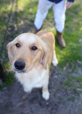 IVY - banskia park puppies - 1 of 50 (9)