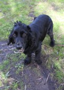 SWISH - Bankisa park puppies - 1 of 22 (19)