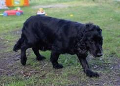 SWISH - Bankisa park puppies - 1 of 22 (20)
