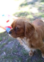 MARY- Bankisa Park Puppies - 1 of 26 (17)