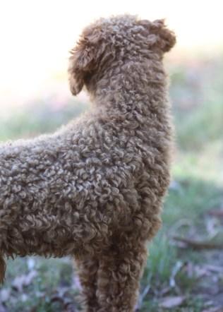 AJ - Bankisa park puppies - 1 of 47 (10)