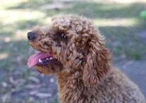 AJ - Bankisa park puppies - 1 of 47 (18)