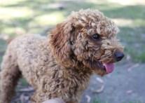 AJ - Bankisa park puppies - 1 of 47 (19)