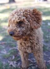 AJ - Bankisa park puppies - 1 of 47 (25)
