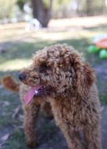 AJ - Bankisa park puppies - 1 of 47 (34)