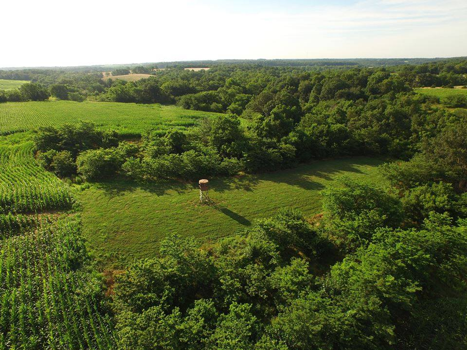 A rectangular shape is one of the best food plots for deer. It offers easy cover access and plenty of shot opportunities.