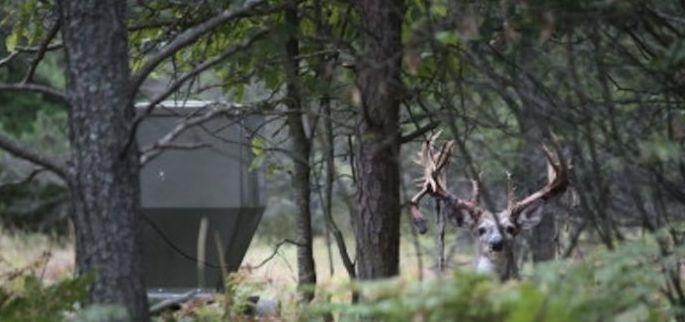 The Ultimate Deer Feeder for Leased Hunting Land - Banks