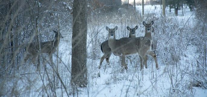 Hunting Late Season Food Sources