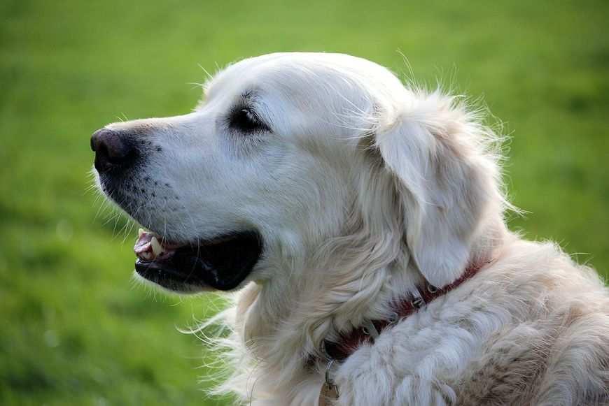 Psie dolegliwości