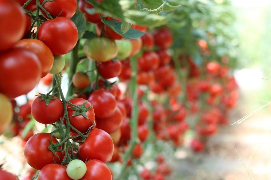 Rekomendowane środki ochrony roślin