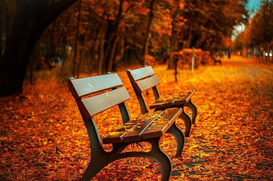 Parkowe ławki