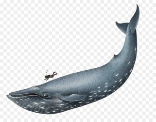 Whale Cartoon png download 874*692 Free Transparent Blue Whale png Download CleanPNG / KissPNG