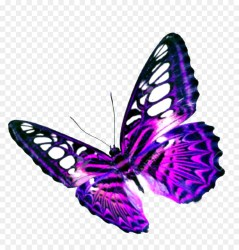 Butterfly Clipart png download 1058*1100 Free Transparent Butterfly png Download CleanPNG / KissPNG