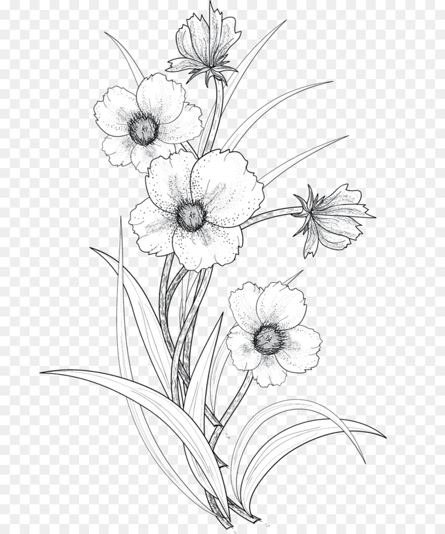 Flowers Drawing Png : flowers, drawing, Black, White, Flower, Download, 741*1079, Transparent, Drawing, Download., CleanPNG, KissPNG
