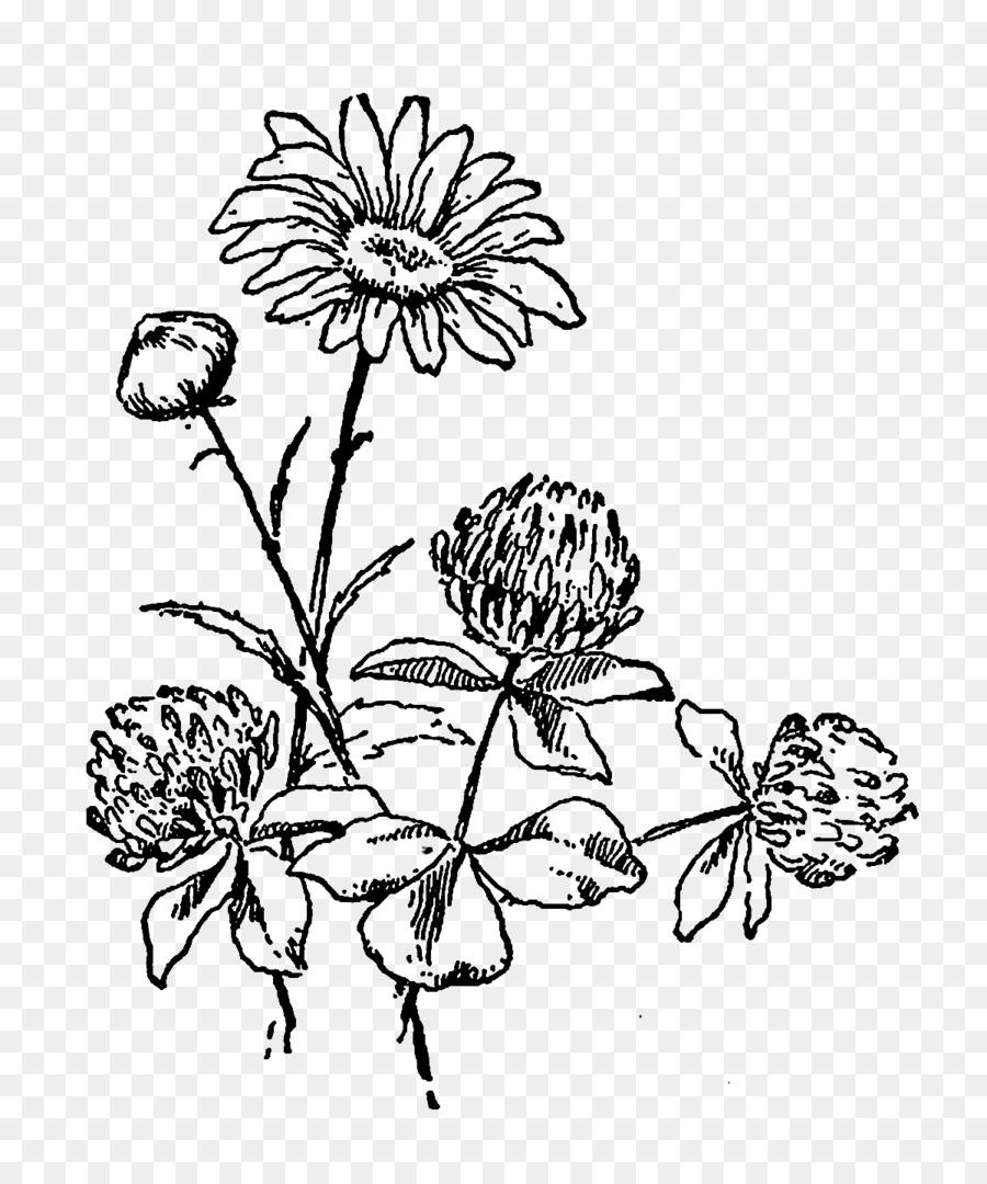 Flowers Drawing Png : flowers, drawing, Hotmen:, Black, White, Flower, Drawing