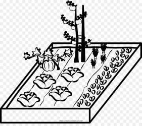 vegetable garden clip gardenpicdesign drawing transparent 1000