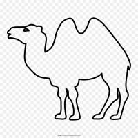 Dromedar Zeichnen   Tier Malen