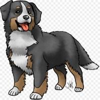 886 malvorlagen berner sennenhund   Coloring and Malvorlagan