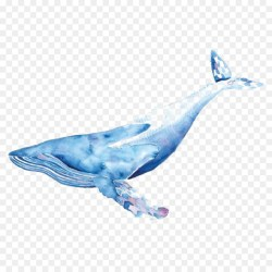 Whale Cartoon png download 1024*1024 Free Transparent Transparent Watercolor png Download CleanPNG / KissPNG