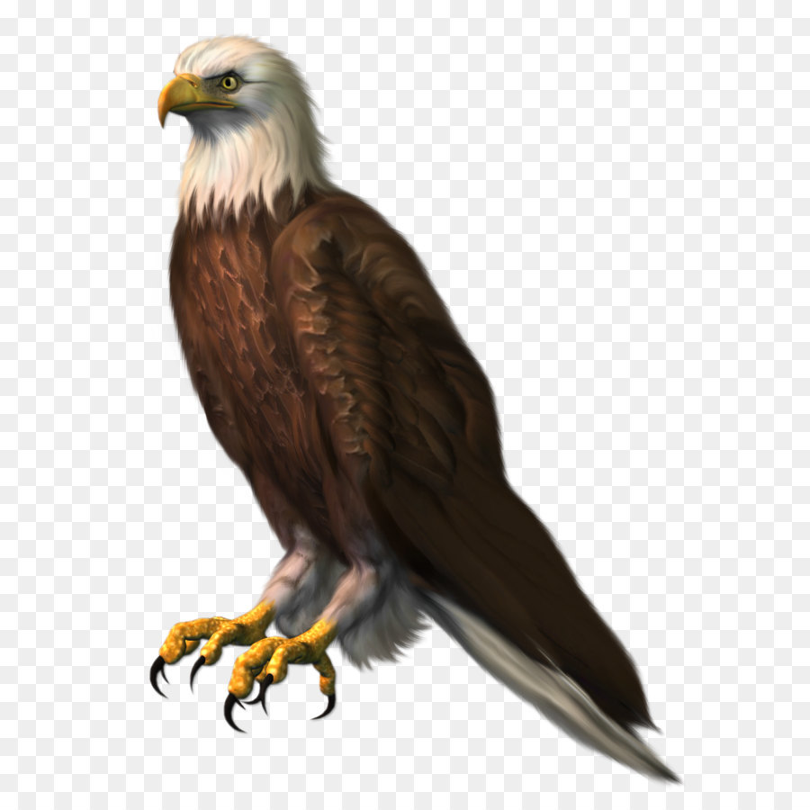hight resolution of bald eagle bird eagle png