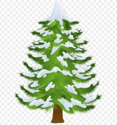pine tree winter fir pine family png [ 900 x 900 Pixel ]