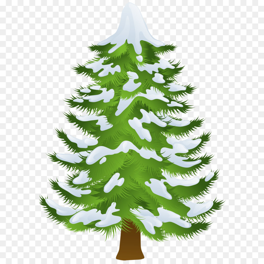 hight resolution of pine tree winter fir pine family png