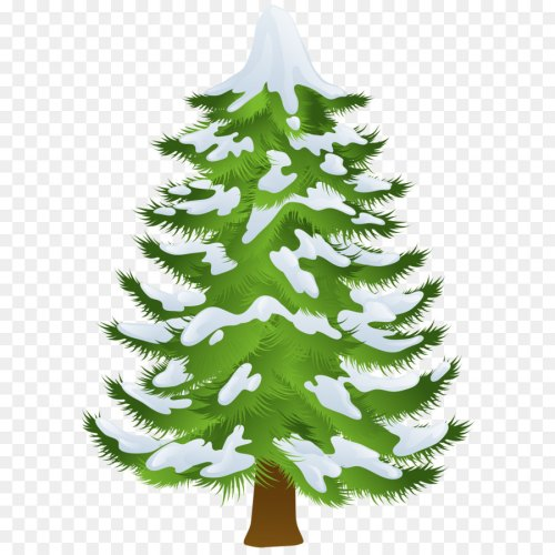 small resolution of pine tree winter fir pine family png