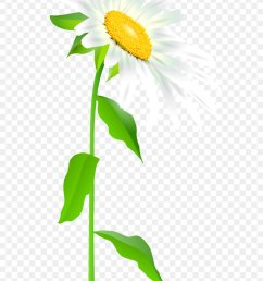 common sunflower text leaf illustration daisy with stem transparent png clip art image png download 3416 7000 free transparent easter bunny png  [ 900 x 1340 Pixel ]