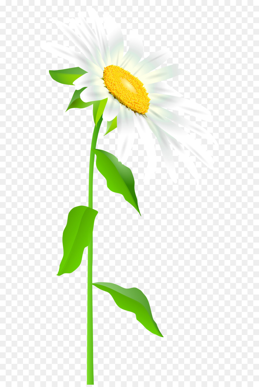 hight resolution of common sunflower text leaf illustration daisy with stem transparent png clip art image png download 3416 7000 free transparent easter bunny png