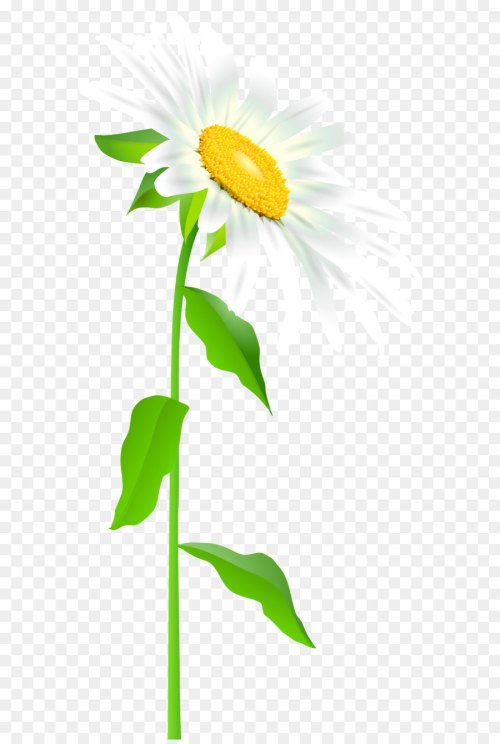 small resolution of common sunflower text leaf illustration daisy with stem transparent png clip art image png download 3416 7000 free transparent easter bunny png