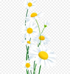 common daisy flower chamomile petal yellow png [ 900 x 1040 Pixel ]