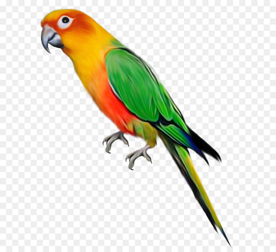 parrot macaw png download