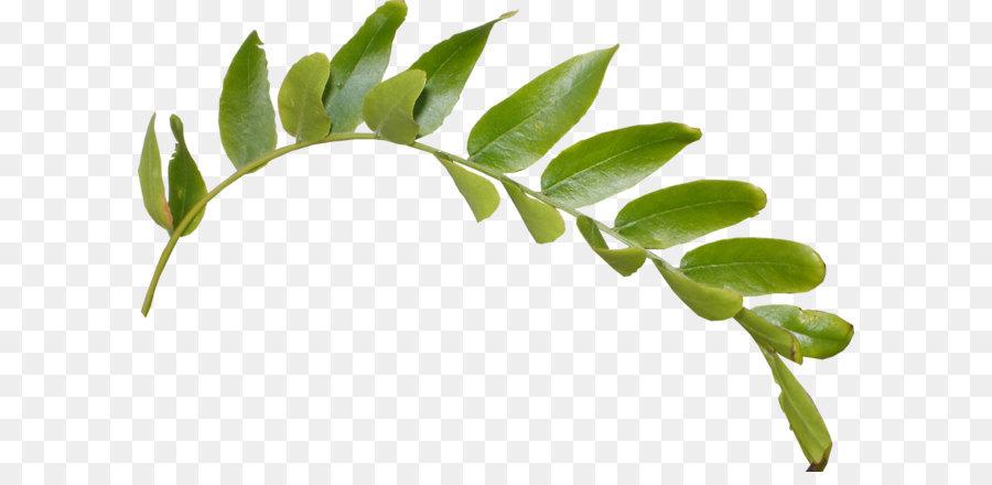 Leaf Clip Art  Leaves Png Hd Png Download 948*624