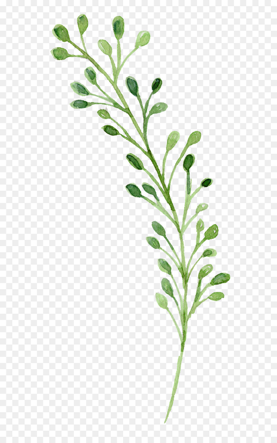 Watercolor painting Green  Watercolor flowers 16043512 transprent Png Free Download  Leaf