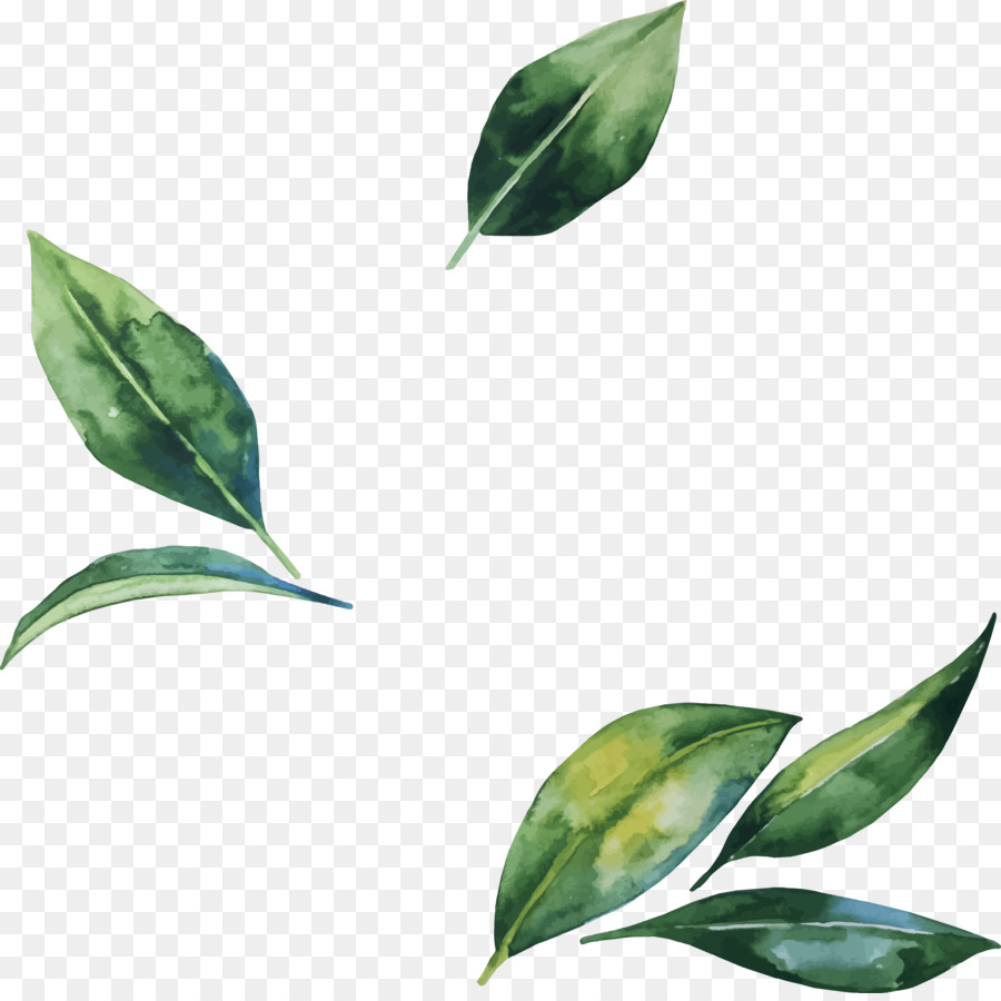 Fall Foliage Wallpaper For Computer Leaf Flower Illustration Hand Painted Watercolor Leaves