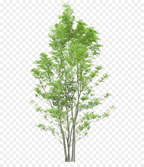 small resolution of tree diagram web browser evergreen plant png