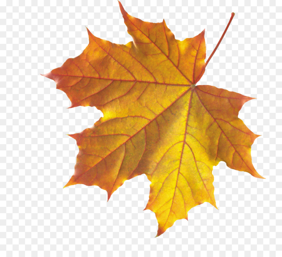 autumn leaves background png