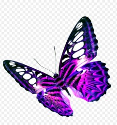 butterfly purple flight png [ 900 x 940 Pixel ]