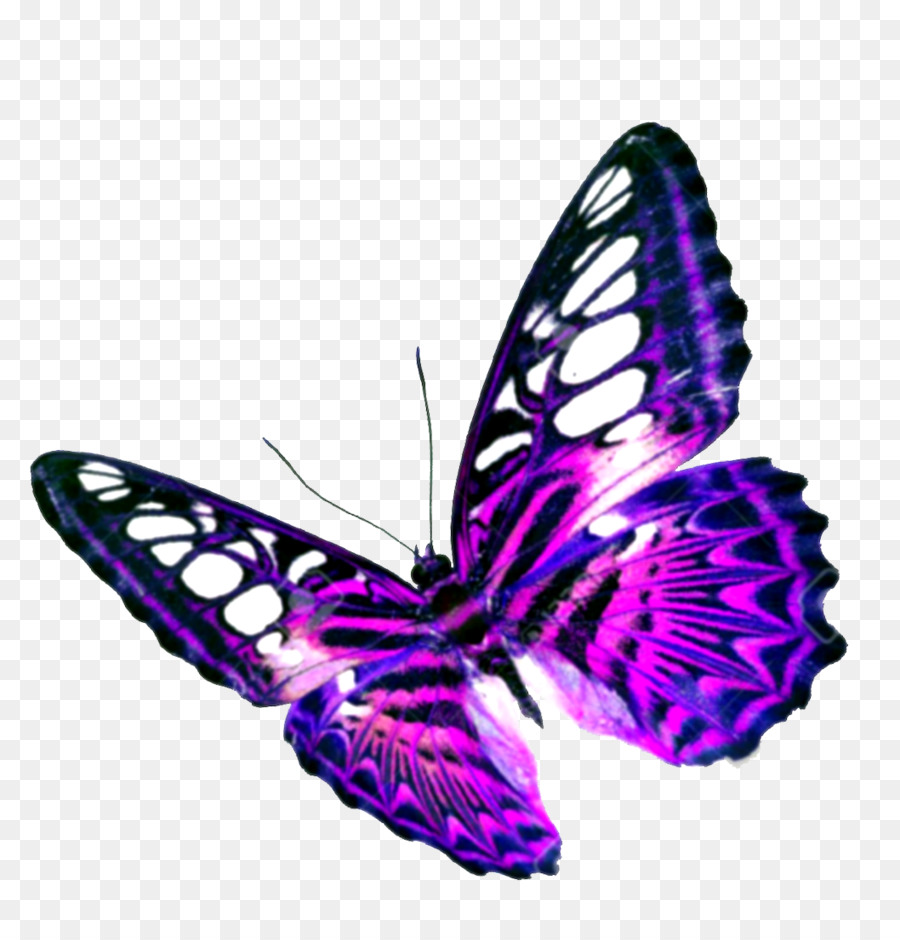 hight resolution of butterfly purple flight png