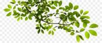 Tree Branch Clip art - Tree Branch Transparent PNG 846*378 ...