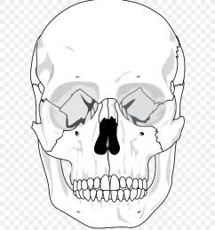 skull human skeleton anatomy monochrome photography artwork png [ 900 x 1000 Pixel ]
