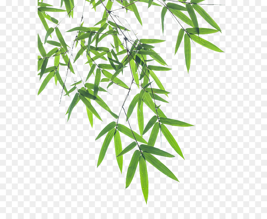 Falling Leaves Wallpaper Free Download Bamboo Leaf Euclidean Vector Bamboo Pictures 646 722