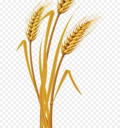 vecteur diagram plot grass family flower png [ 900 x 1440 Pixel ]