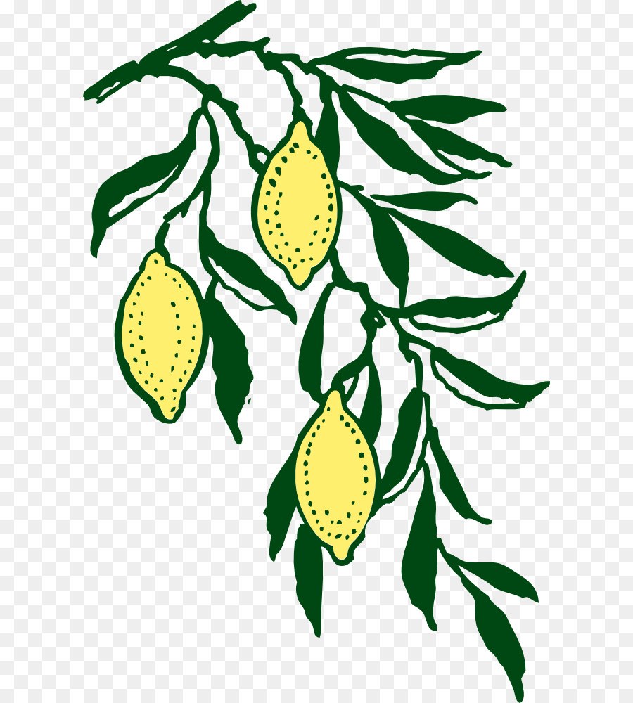 medium resolution of grapevine clipart png download 664 1000 free transparent lemon png download