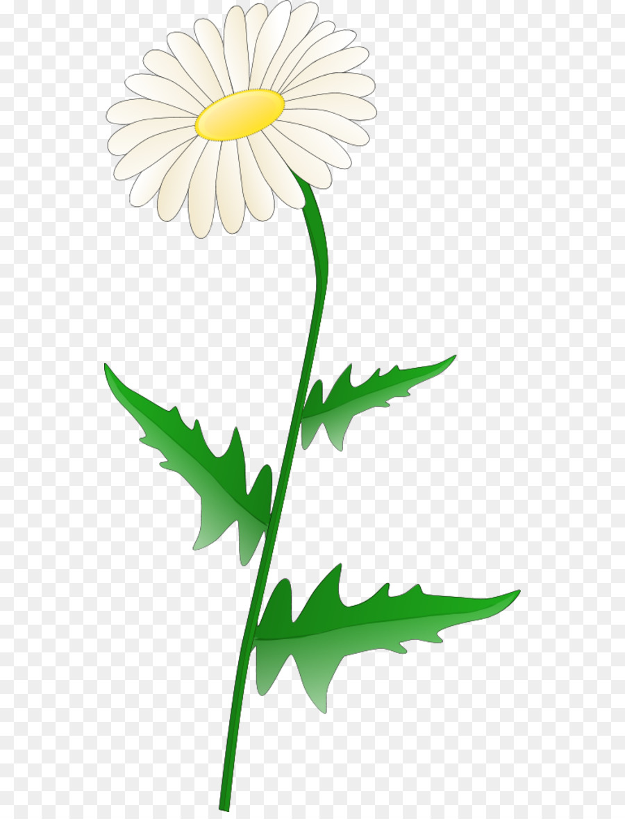 hight resolution of free content common daisy scalable vector graphics chrysanths plant png