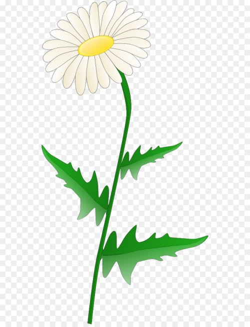 small resolution of free content common daisy scalable vector graphics chrysanths plant png
