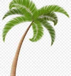 arecaceae coconut tree plant leaf png [ 900 x 1080 Pixel ]