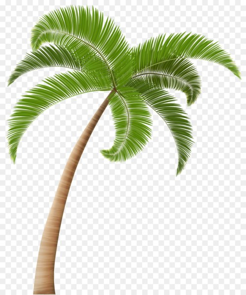 small resolution of arecaceae coconut tree plant leaf png