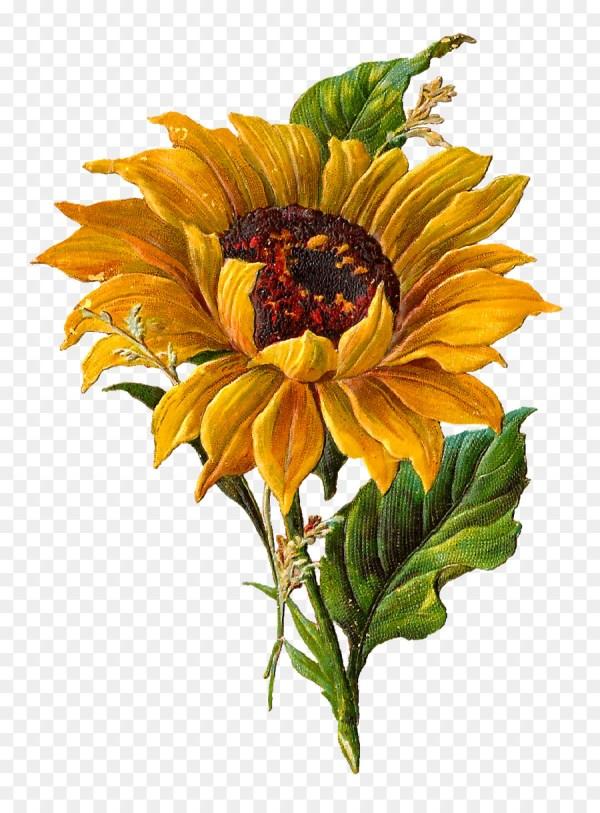 botanical illustration clip art